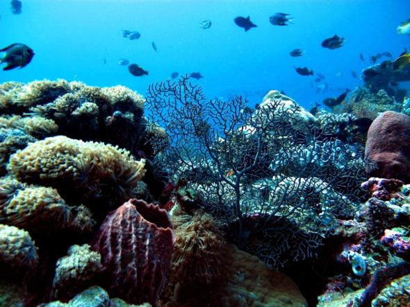 Wakatobi Underwater view