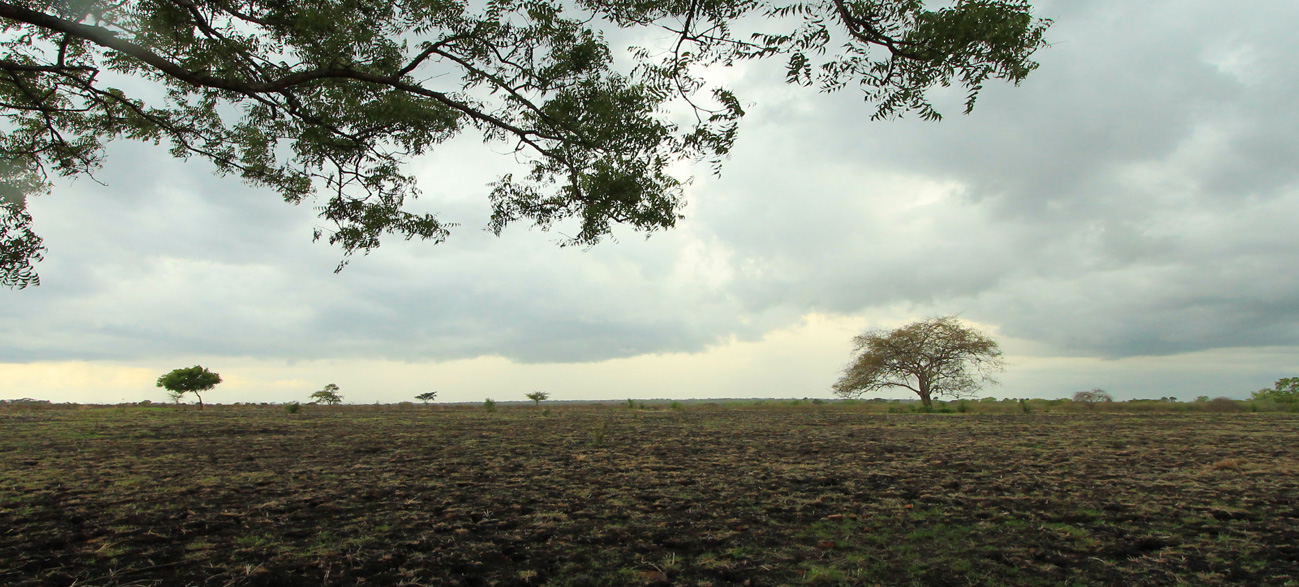 Savana Bekol, Baluran National Park