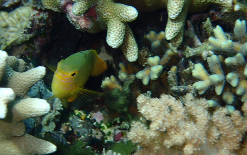 Coral fish in Gili island