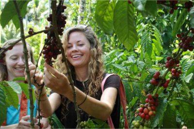 Agrowisata Kopilego Banyuwangi 400x267 Welcome
