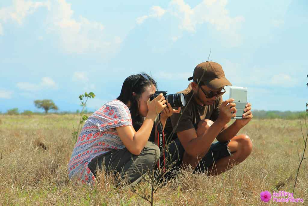 capturing wild animals activities in baluran national park
