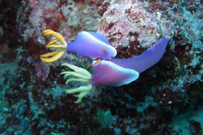 Amazin Coral reef of Wakatobi