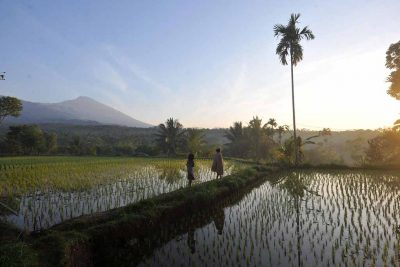 Locals at paddyfield in Tetebatu village