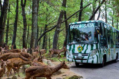 Jelajah Taman safari Prigren 400x267 Welcome